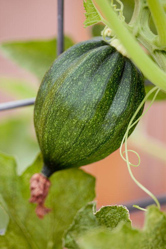Pin By Sean Grillo On Garden Stuff Northeast Gardening Veggie Garden Growing Food