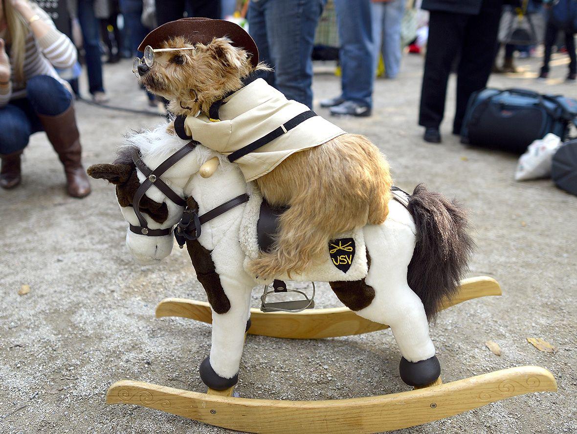 2016 Nyc Halloween Dog Parade Teddy Roosevelt S Rough Rider