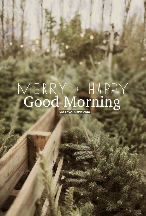 Merry Happy Good Morning holidays christmas merry christmas christmas quotes cute christmas quotes holiday quotes merry christmas quotes christmas good morning quotes christmas quotes for friends christmas quotes for family christmas morning quotes