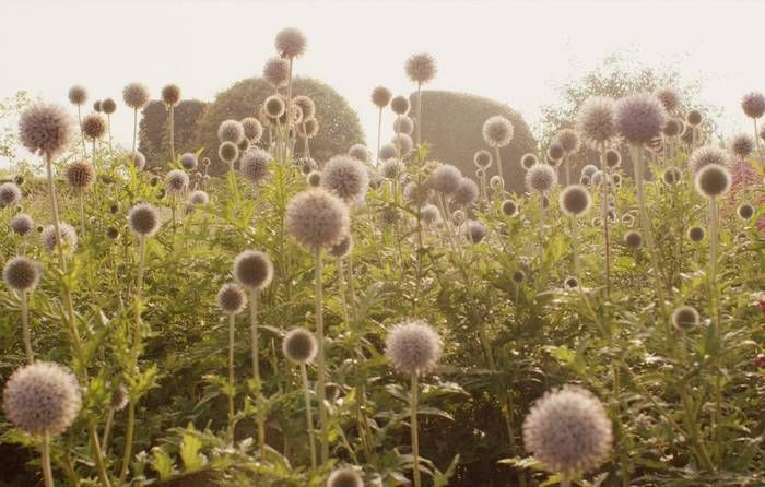 The Wild Garden -  A walk through the perennials with High Line flora designer Piet Oudolf