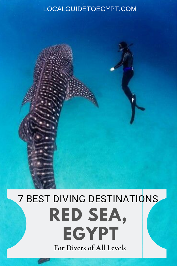 7 Best Diving Destinations In Egypt's Red Sea For Divers