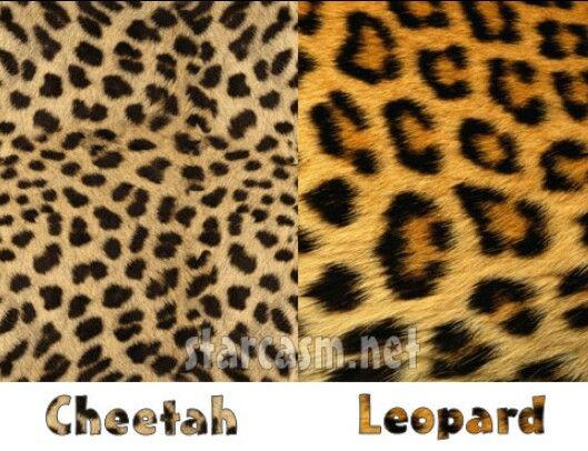 3b0c26518629 Cheetah Vs. Leopard | INNER ANIMAL | Leopard print tattoos, Leopard ...