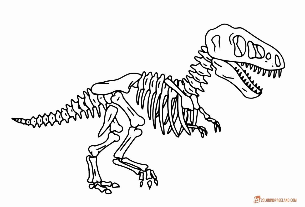 Skeleton Coloring Pages Animal Skeletons Dog Skeleton Dinosaur