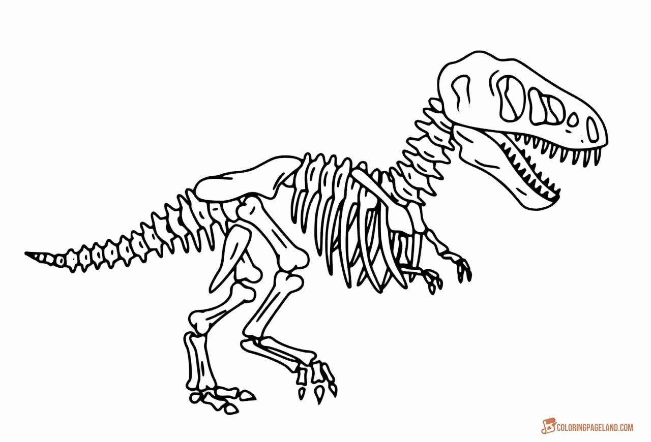 Dinosaur Skeleton Coloring Page Leversetdujourfo Baby T Rex Pages
