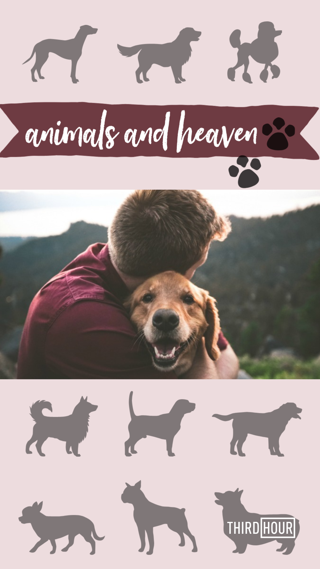 Ever Wondered If You Ll Get To Be With Your Pets In Heaven Find Out Everything That S Been Said About Whether We Ll See Our Animals Again Animals Pets Heaven