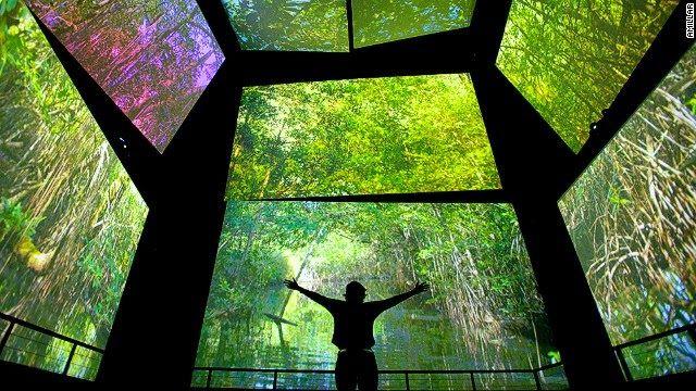 biomuseum panama - SUBMERSIVE ENVIRONMENT