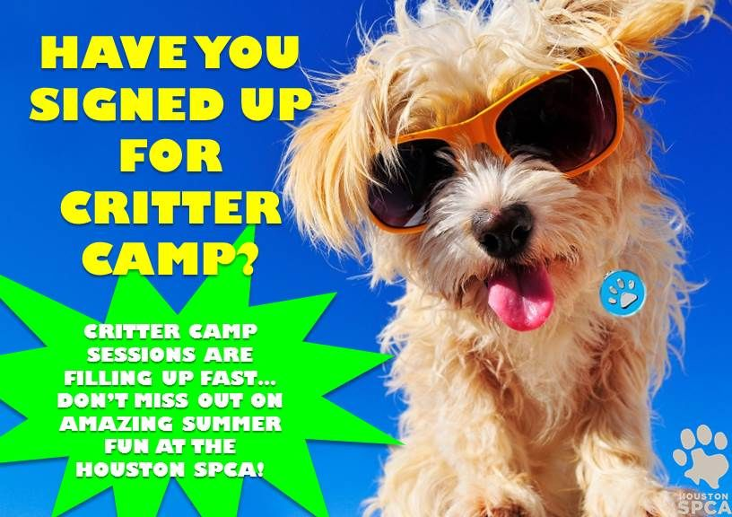 Don T Miss Your Chance For Amazing Summer Fun At The Houston Spca