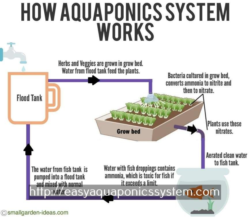 aquaponics 4 you how to make a hydroponic garden with