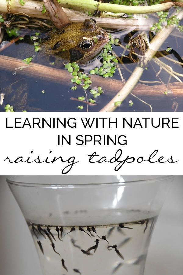 Raising Tadpoles Nature Activities Nature Kids Nature School