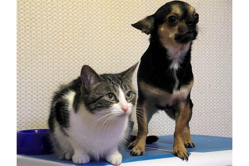 Should We Keep A Pet At Home Pet Sitting Jobs Pet Day Pets