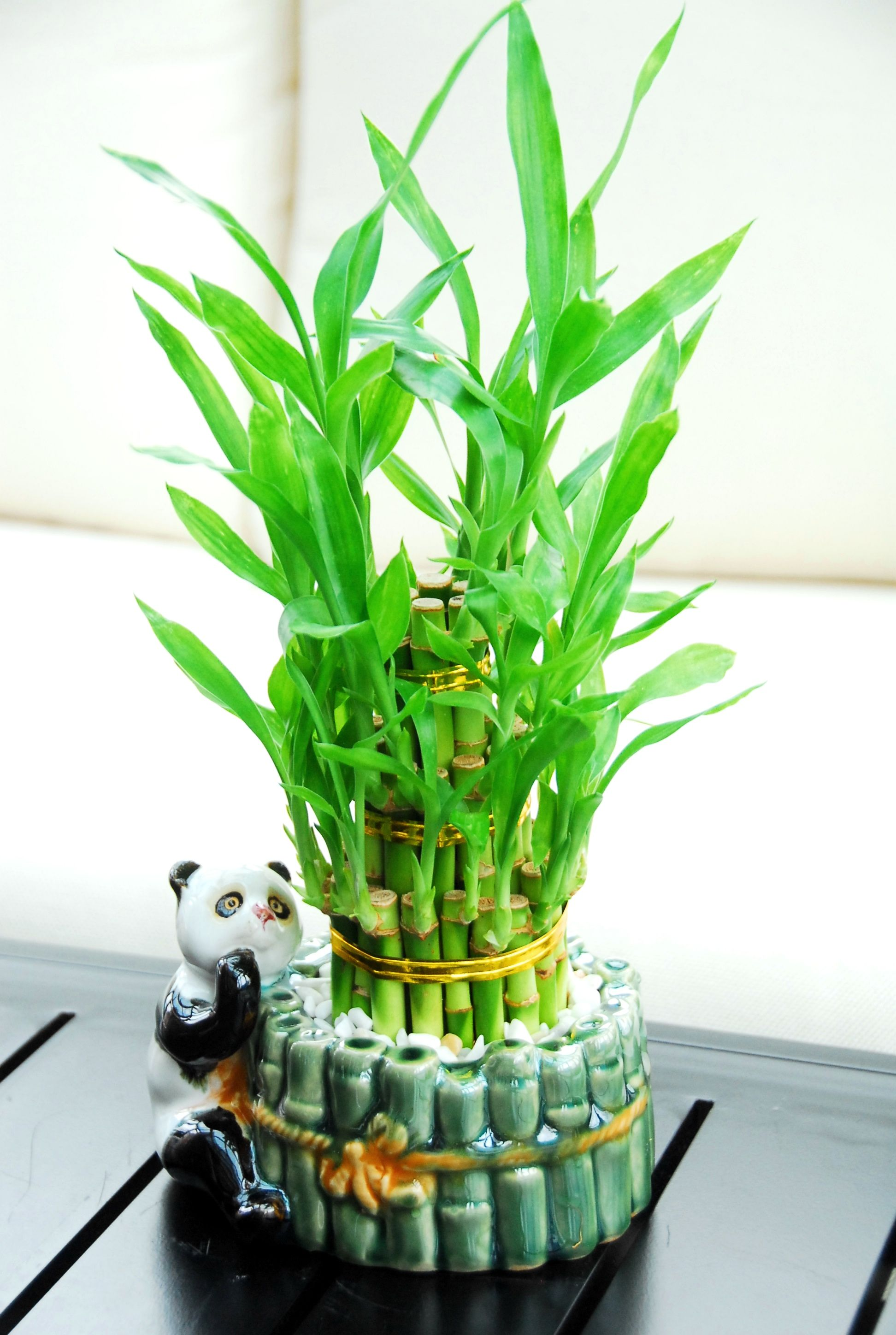 3 Tiered (Small) Lucky Bamboo Arrangement ($2999) Featured In A Cute