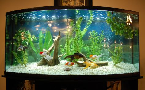 Fancy goldfish tank aquariums fish tanks ponds for Fish tank for goldfish
