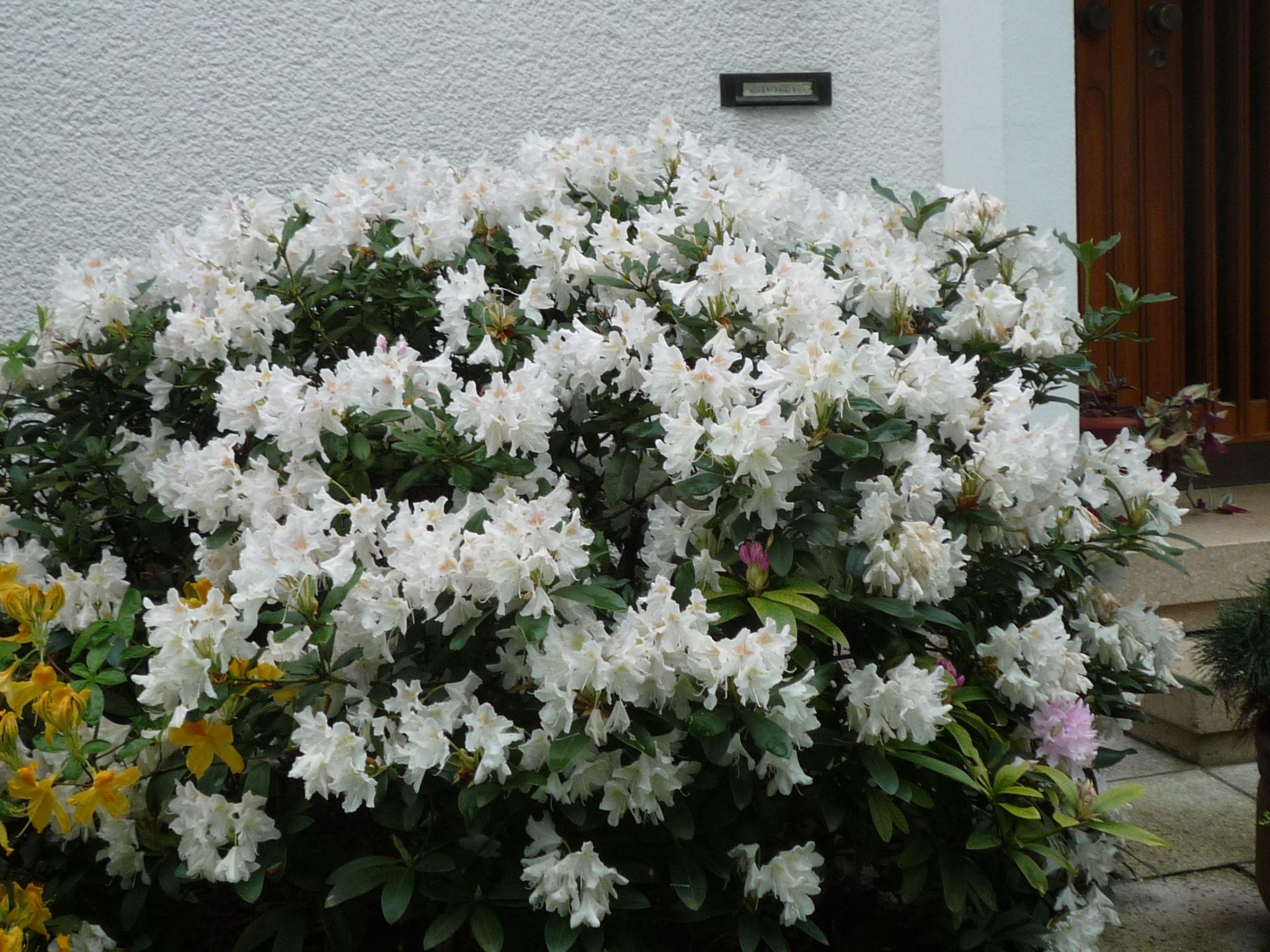 Schöne Blumen Blumen Garten Pinterest