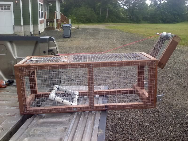 how to trap a raccoon in your backyard