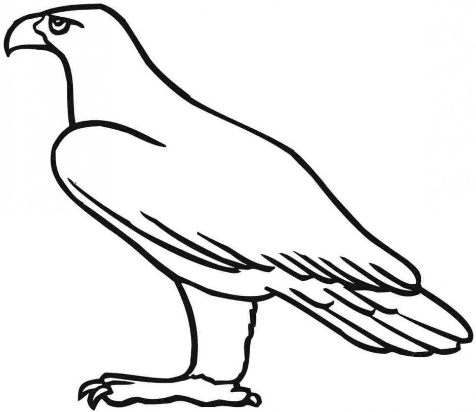 Simple Eagle Standing Coloring Page Eagle Coloring Pages
