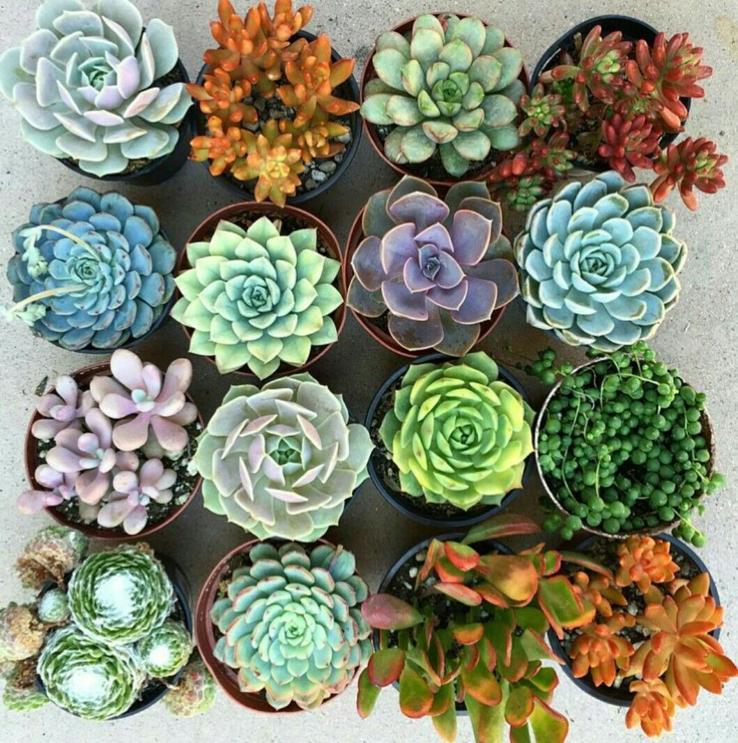 Image result for succulent aesthetic
