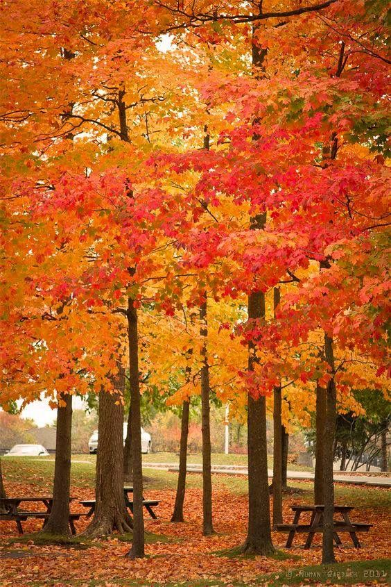 Glorious Fall In This Season Of >> Glorious Autumn Colors All Things Fall My Favorite Season Of