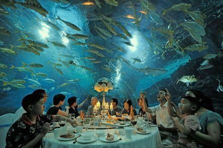 ¡Espectacular! Miles de peces de colores nadan a sus anchas en acuario del restaurante 'Tianjin Haichang Polar Ocean World'. En un marco incomparable, estos afortunados comensales disfrutan de una cena y de un concierto submarino único en el mundo.