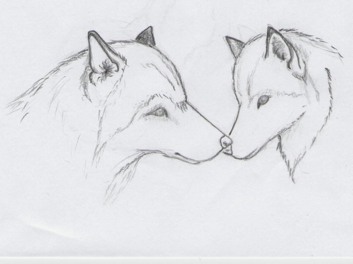easy drawing of animals | Wolf Sketch by greywolves ...