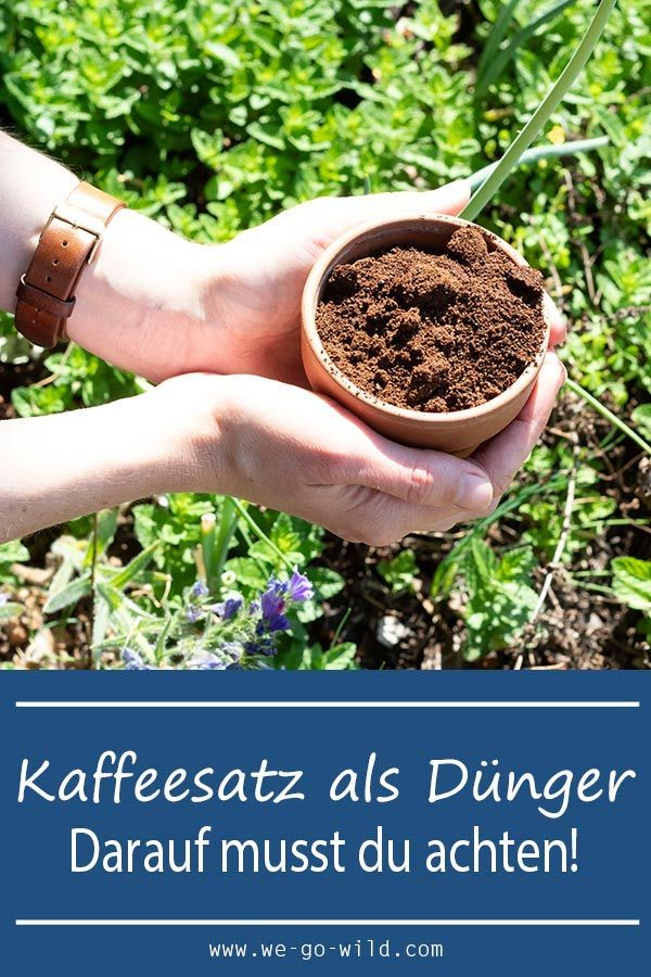 Coffee grounds as fertilizer for garden and potted plants- WE GO WILD
