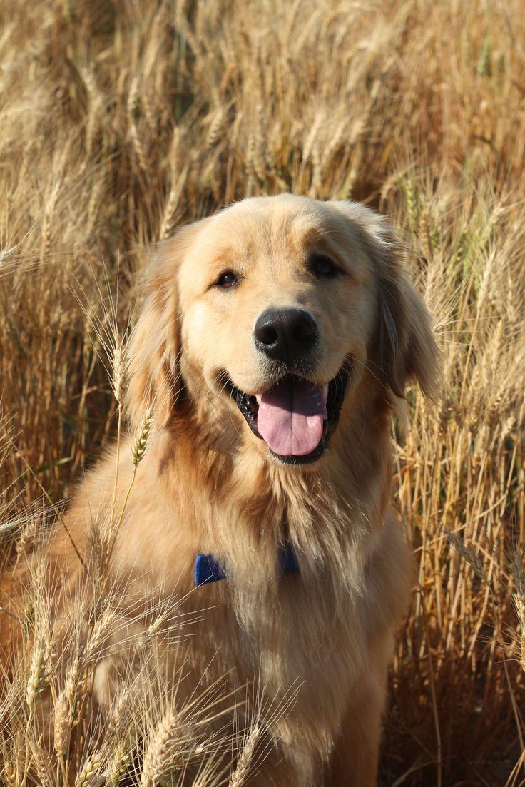 Pin de maria elena en animales pinterest dogs puppies y dogs