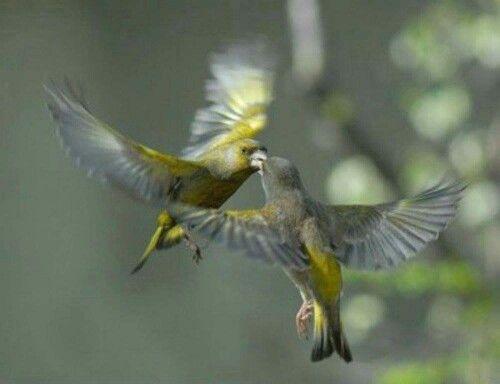 Find This Pin And More On Vogels By Creationadmirer See Kleurplaat Voeren Voederhuisje Kleuterideenl Feeding Birds Preschool Coloring