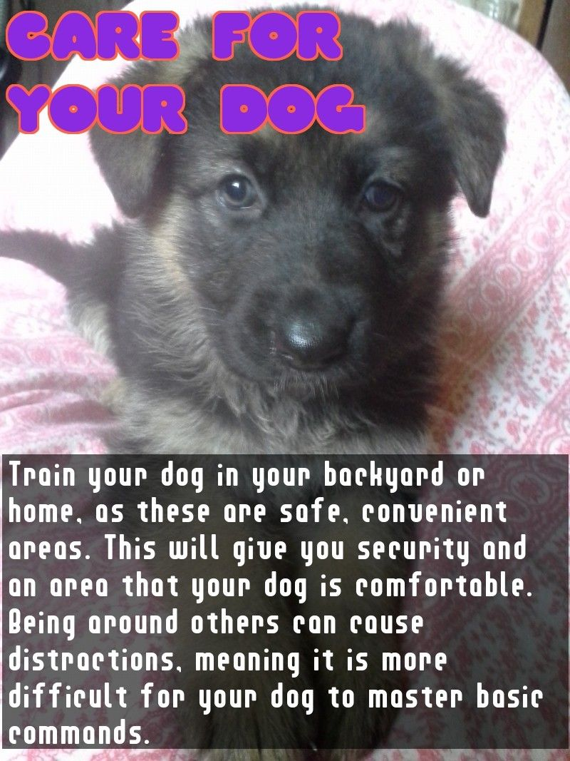 Free Expert Advice On The Topic Of Dogs Dogs Dog Care Tips Pet