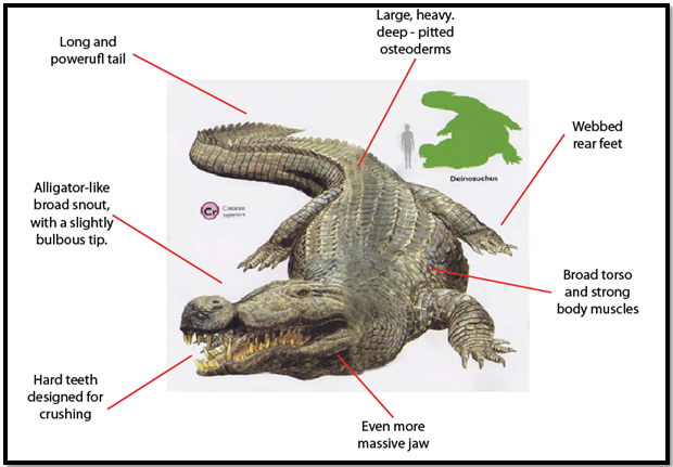 Image Result For Crocodile Diagram Worksheets Pinterest
