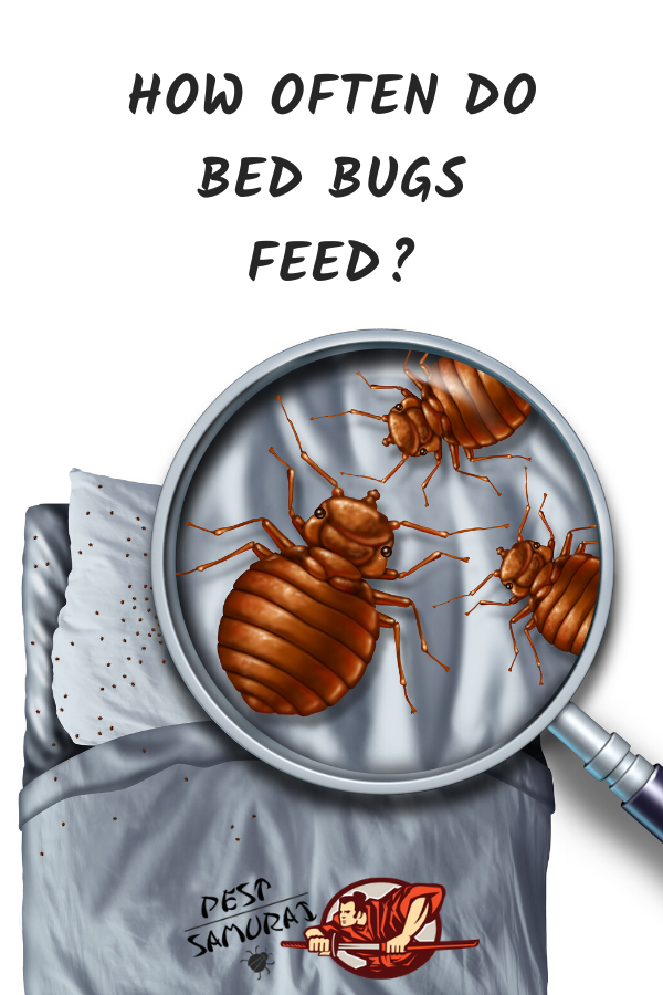How Often do Bed Bugs Feed Bed bugs, Health and fitness