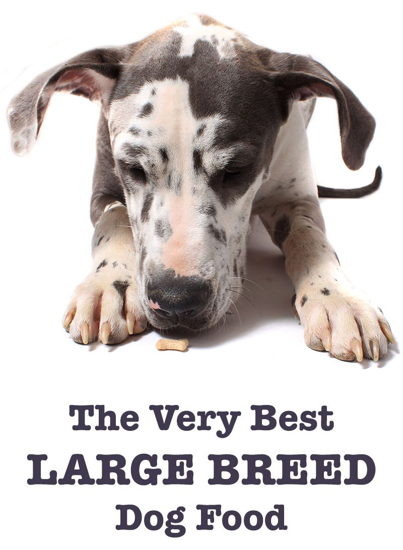 Best Large Breed Dog Food Tips And Reviews Of The Best Brands