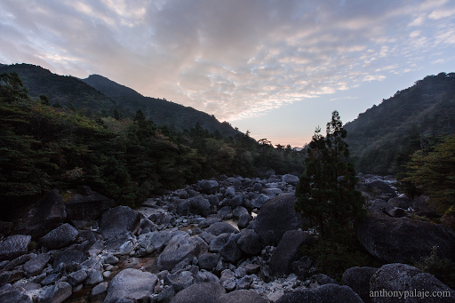 Sunrise, hiking to Jōmon Sugi, Yakushima. Japan image