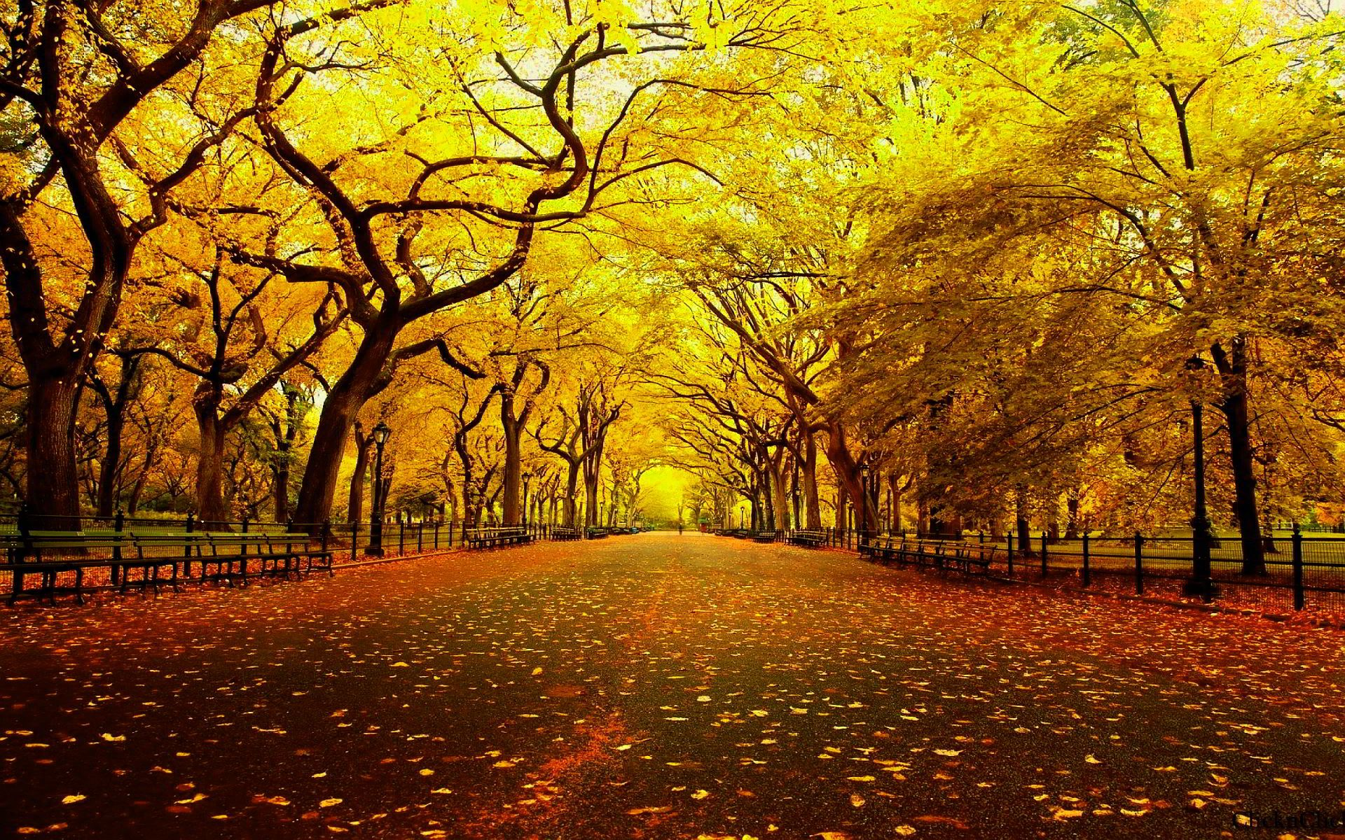 High Resolution Autumn Wallpaper 1920 1200 High Definition Wallpaper Background Wallpapers Scenery Landscape Pictures