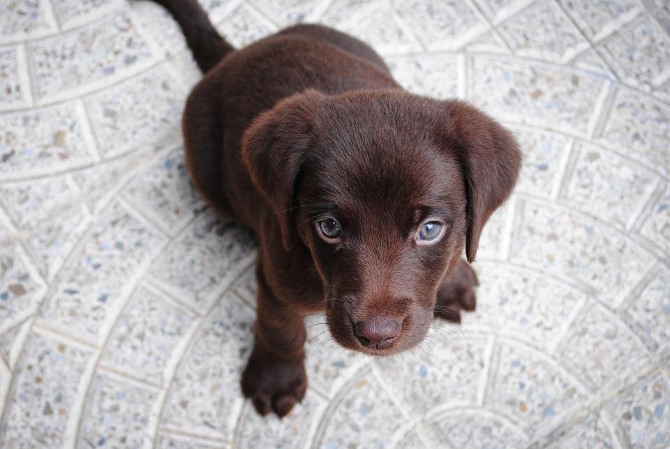 dog puppy pet animals Hunde welpen, Hundehaltung und Hunde