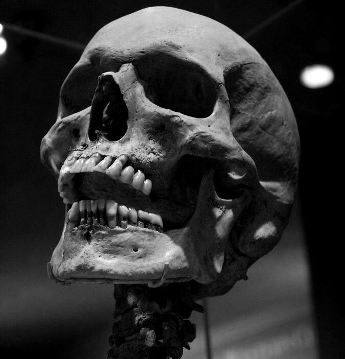 You will look like this in.........127 years. | Skull in ...