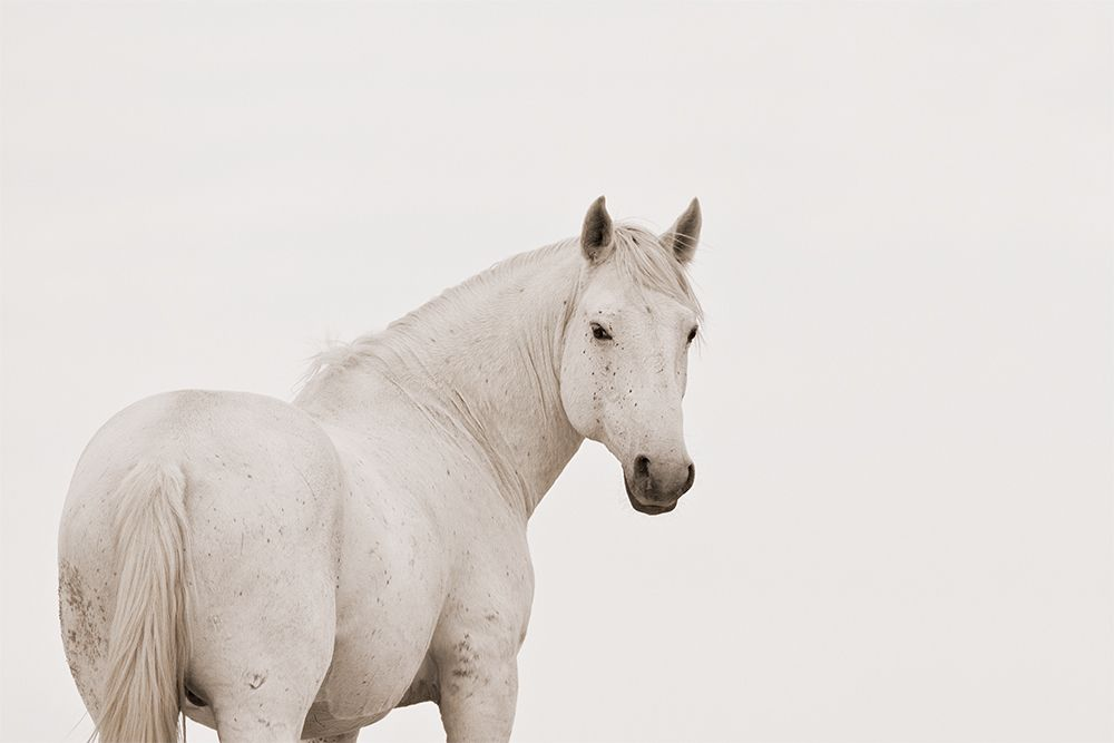 white mustang | inspire me | pinterest | mustang, horse and animal
