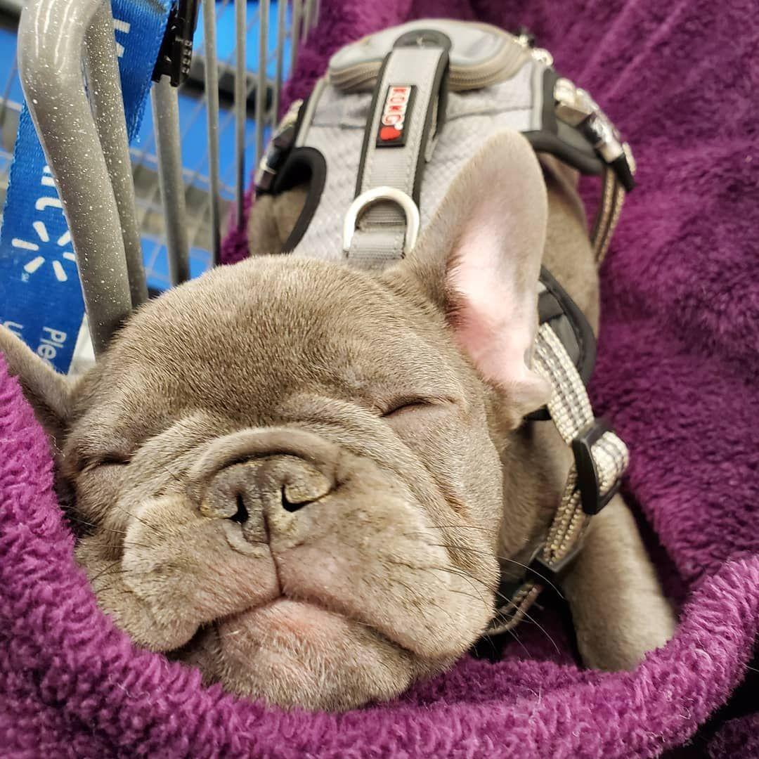 Dana lea sleeping away in walmart french bulldog