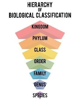 Engage Students In Stem Science Technology Engineering And Math As They Learn About A Tree S Lifecyc Taxonomic Classification Stem Science Stem Activities