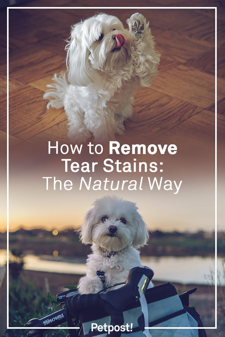 How To Remove Tear Stains The Natural Way Dog Tear Stains Tear