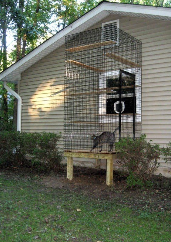 Window Cat Door And Cat Aviary For Inside Cats.. Could Even