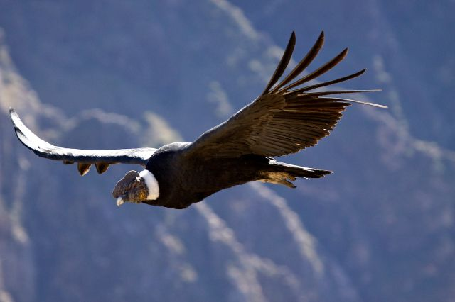 The Myth of the Condor- Latin America Folktales