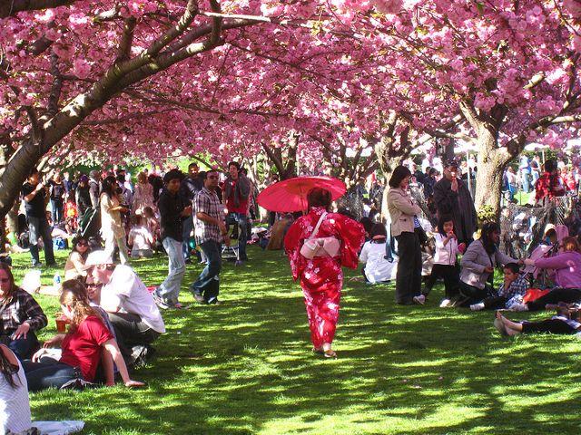 Sakura Matsuri Brooklyn Botanic Garden S Japanese Cultural Festival Brooklyn Botanical Garden Botanical Gardens Brooklyn Botanical Garden Wedding