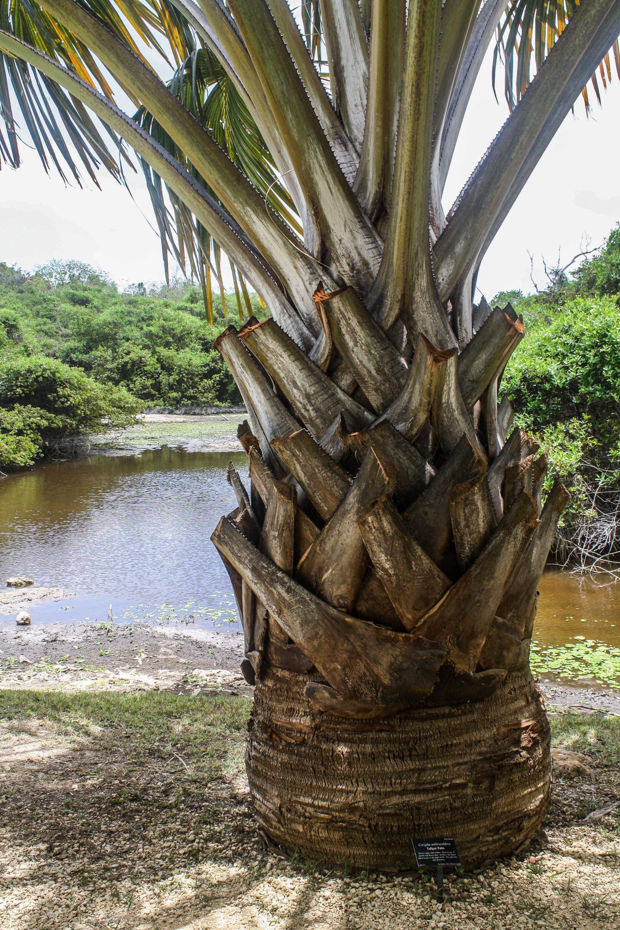 Queen Elizabeth II Botanic Park, Grand Cayman, Cayman Islands www ...
