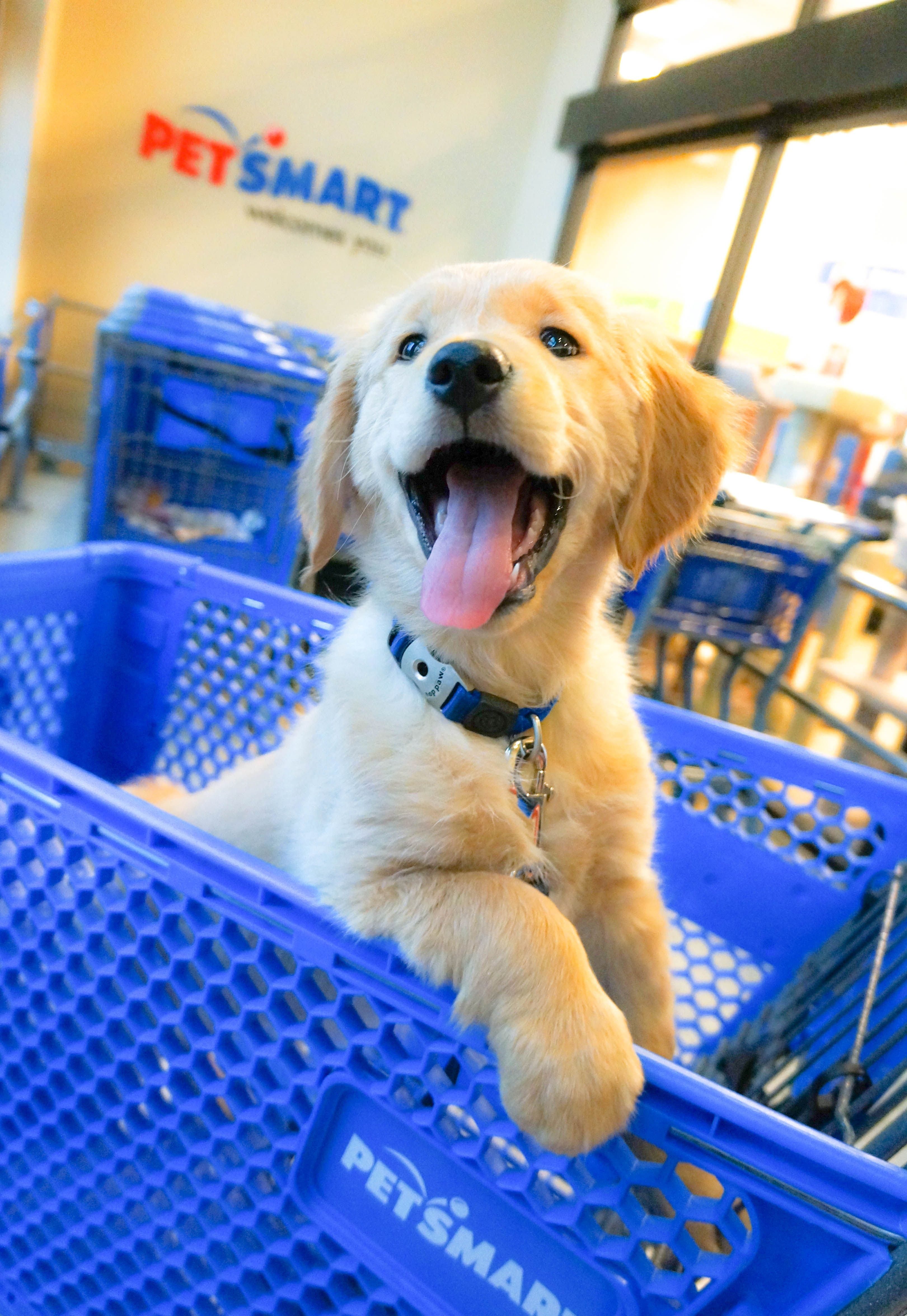 We Couldn T Be Happier That You Stopped By Petsmartcart Dog Training Near Me Aggressive Dog Dog Behavior Problems
