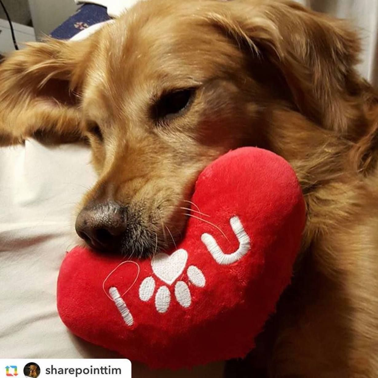 Best diet for golden retrievers foods to feed and foods