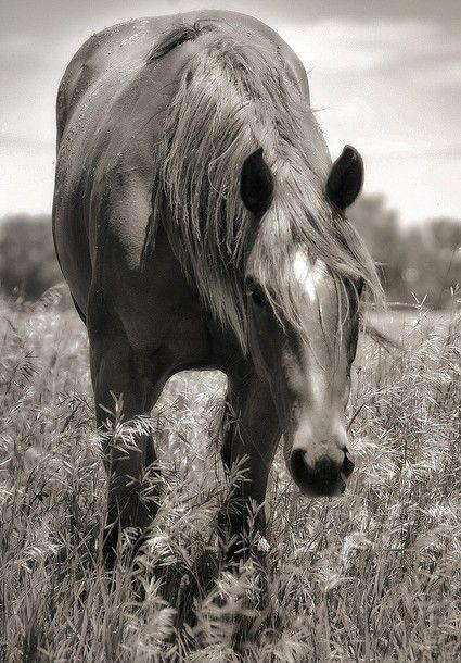 mare love.