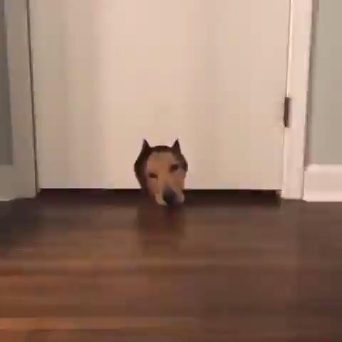Excuse Me Mr Lazy Dog Funnydogs Lazy Dog Funny Dog Videos Dog Gifs