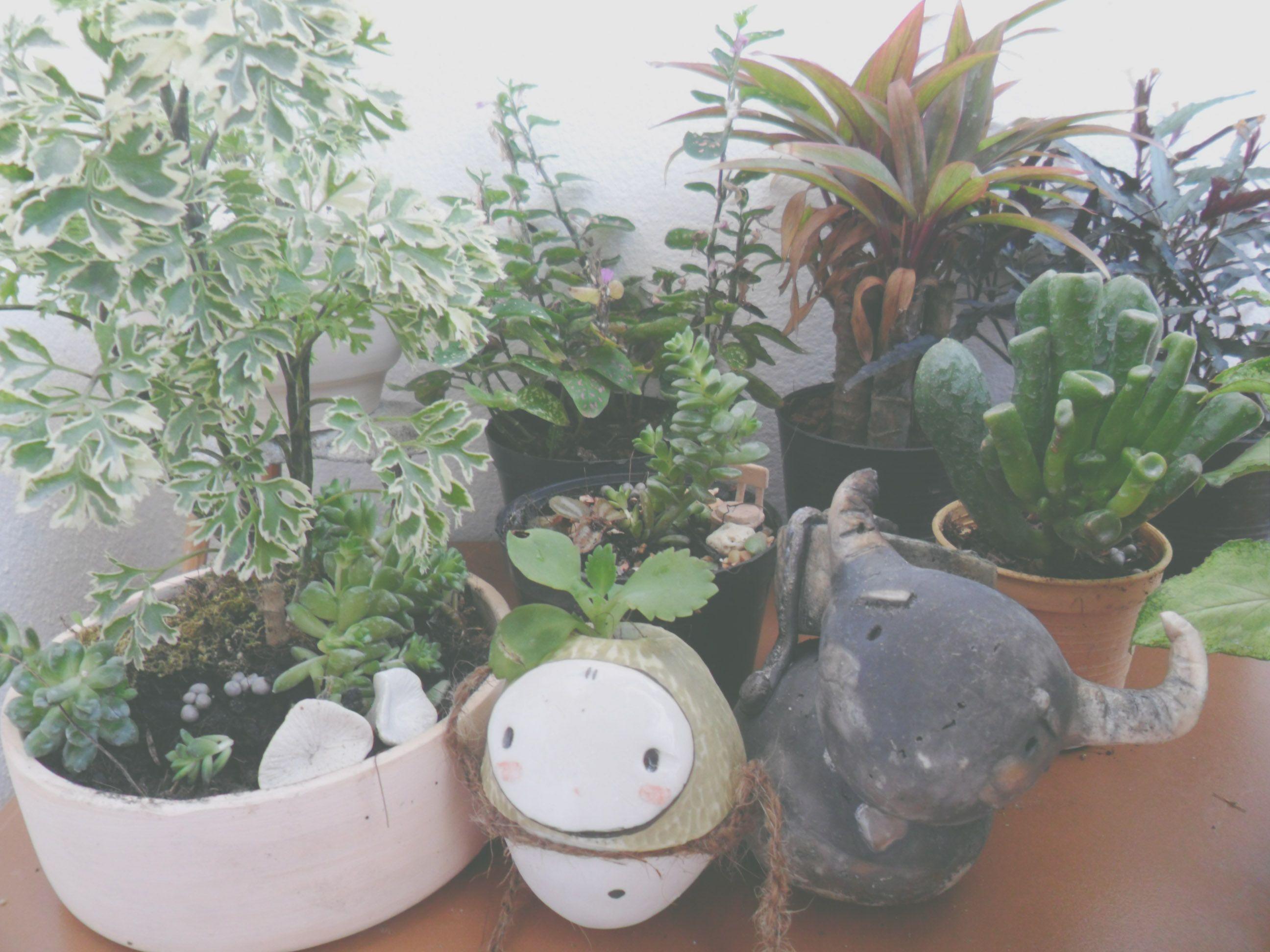 My Garden room