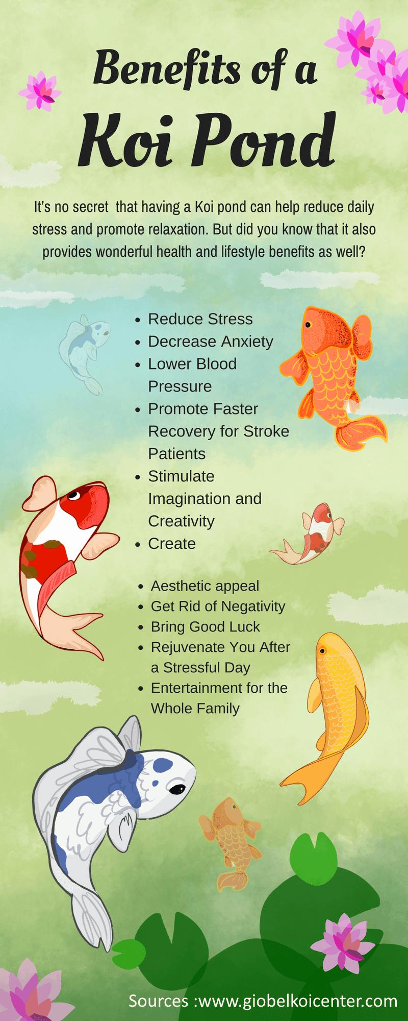 Koi Fish Therapeutic Effects Koi Koifish Koipond Koifishtattoo Koifishinformation Koifishponds Koi Fish Care Koi Fish Koi