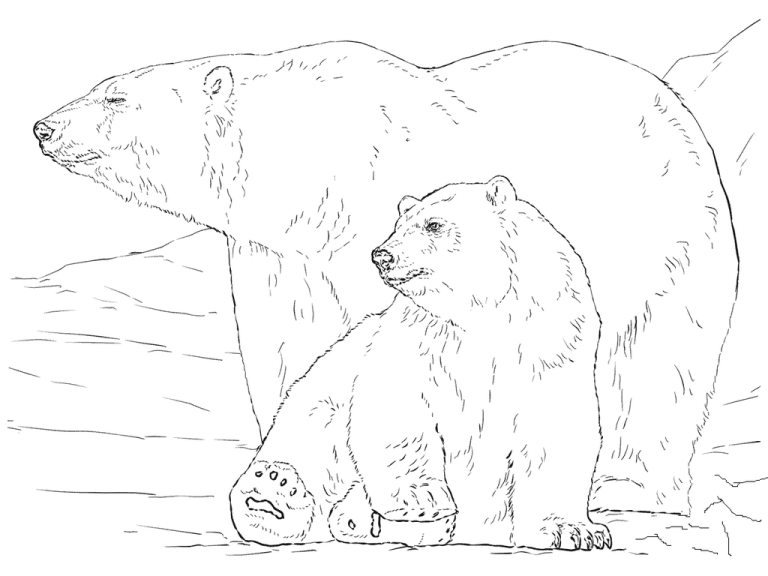 Realistic Giant Polar Bear Coloring Pages For Small Children Polar Bear Coloring Page Bear Coloring Pages Polar Bear Art
