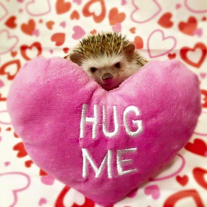 Valentines Hedgehogs